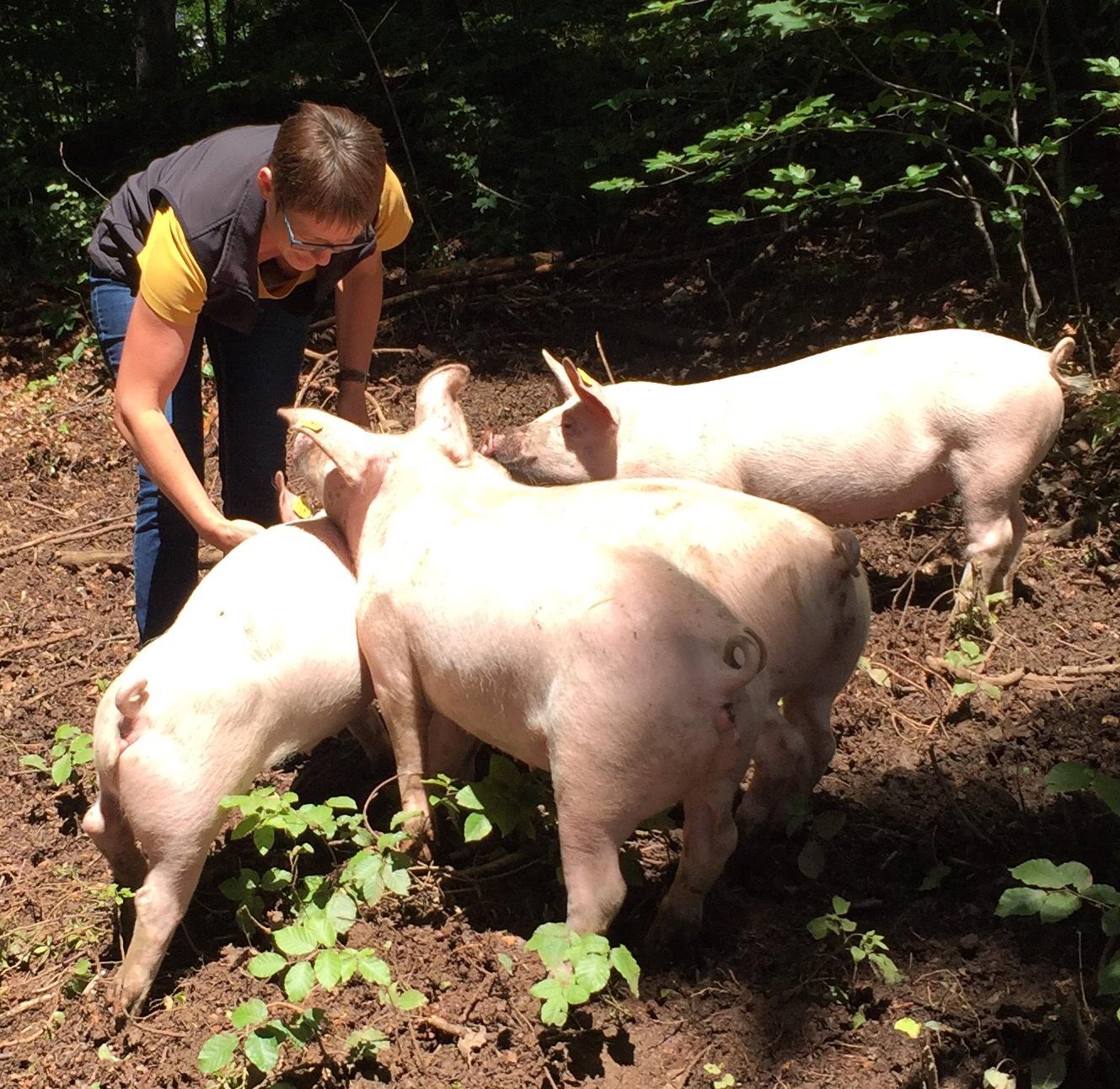 Vorarlberger Tierschutzpreisträgerin Sieglinde Breuss aus Übersaxen mit ihren glücklichen Freilaufschweinen