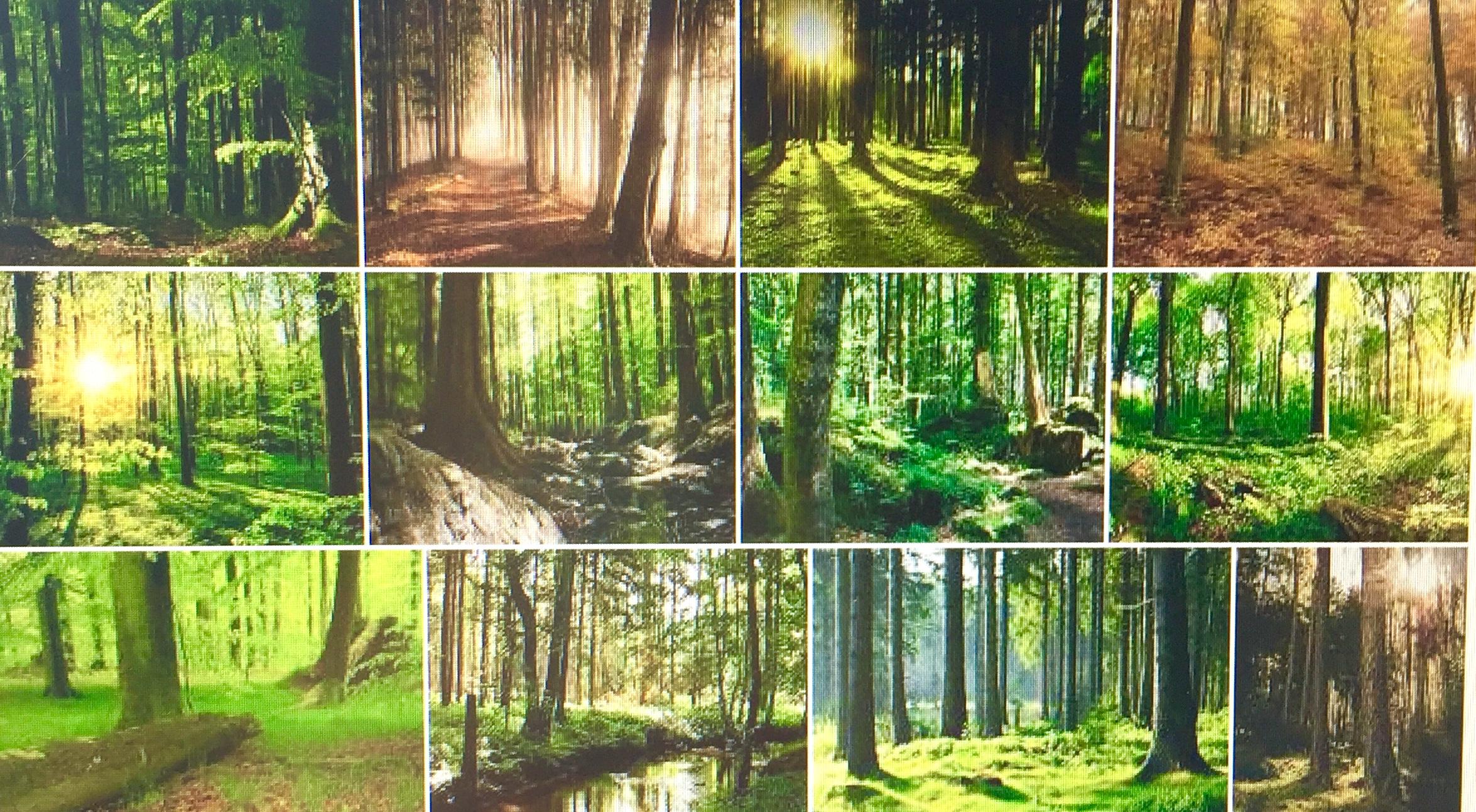 """Die Botschaft des Waldes: Umweltzerstörung bedeutet vor allem Selbstzerstörung — durch die Rückkehr zur Natur werden wir wieder vollständiger. In der Weltsicht der meisten Menschen, die ihnen von außen eingeflößt wird, stehen die Dinge auf dem Kopf. Denn der Mensch erscheint in ihr als ein von der Natur abgetrenntes und unabhängiges Wesen. Nichts und niemand kann seiner rücksichtslosen Umweltzerstörung somit Einhalt gebieten, am wenigsten die Natur selbst. Dabei sieht die Wirklichkeit eigentlich ganz anders aus. Die Natur ist belebt und beseelt. Sie ist nichts, was außerhalb von uns existieren würde, wie der Begriff """"Umwelt"""" suggeriert. Die enge Gemeinschaft mit dem nichtmenschlichen Leben ist in unserem kollektiven Unbewussten verankert. Dass wir sie teilweise verlassen und gar die Wurzeln gekappt haben, die uns nähren, ist Ursache für viele Krankheitssymptome individueller wie kollektiver Natur. Dies ist aber kein Grund, die Hoffnung zu verlieren, denn es gibt für uns alle den Weg der Umkehr. Dieser würde helfen, eine Gesellschaft im Einklang mit uns selbst und unserer Umgebung zu begründen. Von Immanuel Meyer (neueszeitalterblog); www.progression.at"""